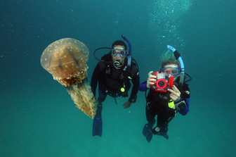 Divers photographing a Jellyfish - Picture property of PADI - Snippy's Snaps Diving - Dive Snippy