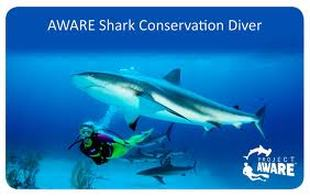 Project Aware Shark Conservation Diver Certification Card - Picture property of PADI/Project Aware - Snippy's Snaps Diving - Dive Snippy