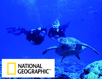 Take the PADI National Geographic Course and be as these Divers looking at sea turtle - Picture property of PADI - Snippy's Snaps Diving - Dive Snippy